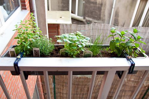 Kruid op het balkon