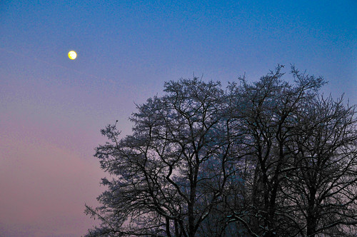 Winter Evening Trees and Moon