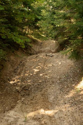 Miško keliukas | Forest byway