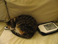 Pandora loves electronics. No joke.