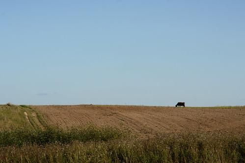 Kaimiškas vaizdelis | Rural view