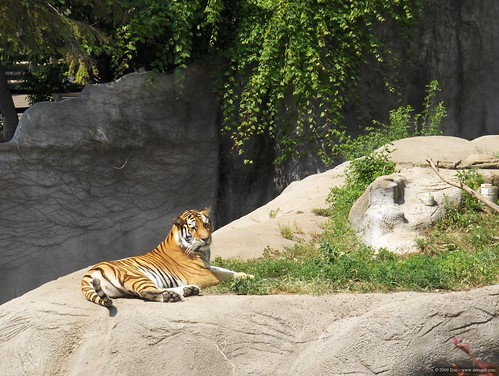 Det Zoo 072808_0004