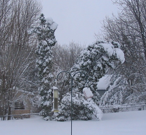 trees bent by snow