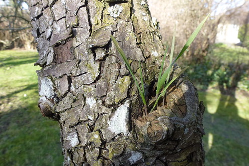 Spiret grønt i et træ