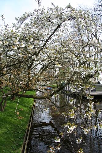 Árbol sobre el canal