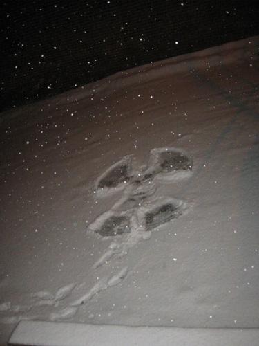 14feb06_snowangel1.jpg