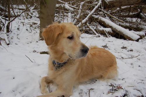 Valéas in the snow!