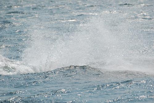 Spray, Orca, Vancouver Island