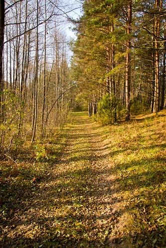 Sausų lapų kelias