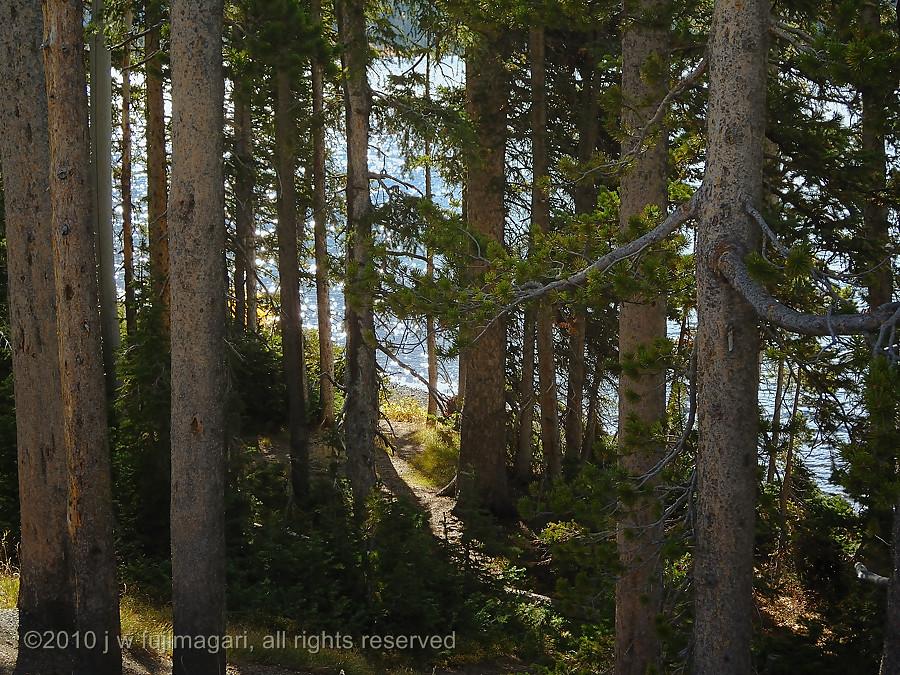 Trail to Lewis Lake