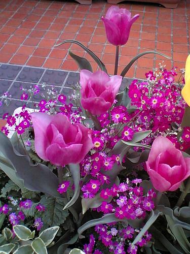 Pretty in Pink & Purple no. 1