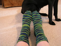 Socks & Dog