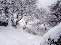 Snow in Fort Tryon Park