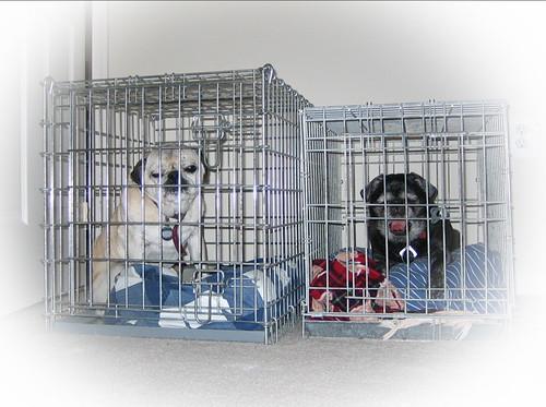 pug-cage.jpg