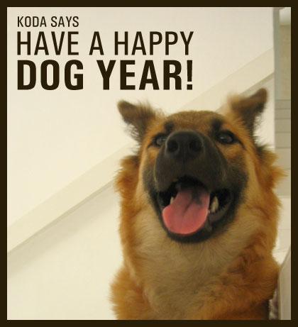 dog-year