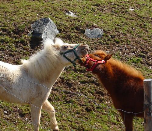 Horseplay