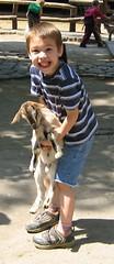 Seth's poor goat