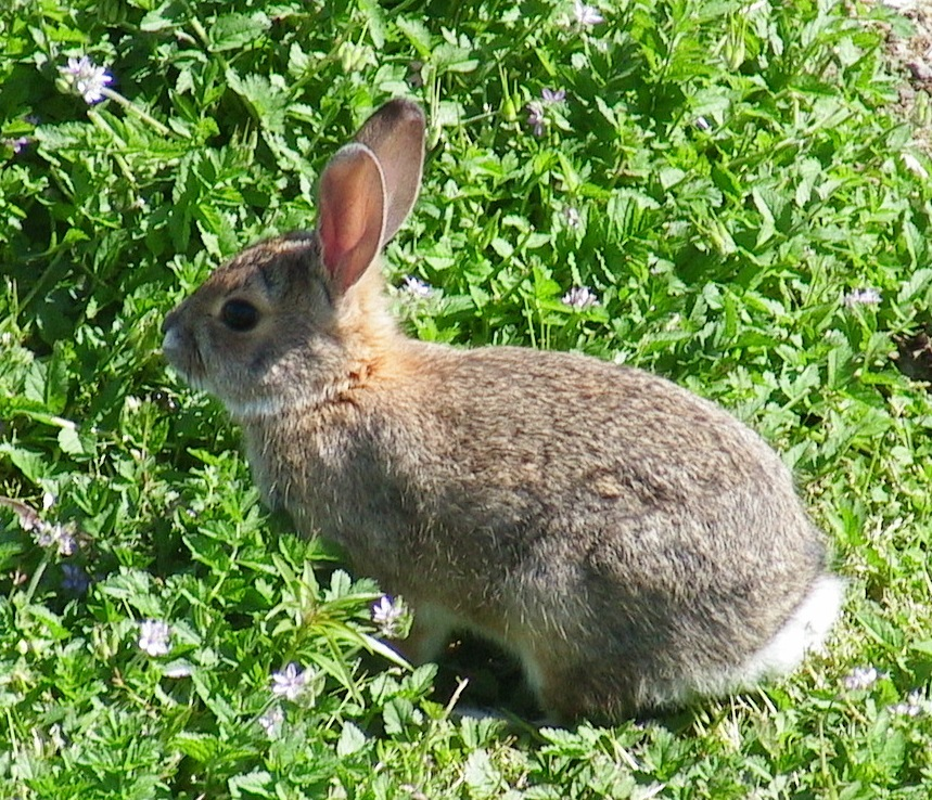 bunny4_06a