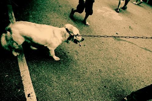 1 Dog, 4 Walkers