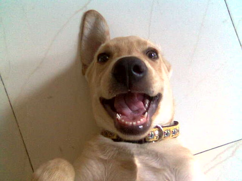 Robin, the smiling dog