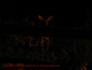 12July2006-Night 004c
