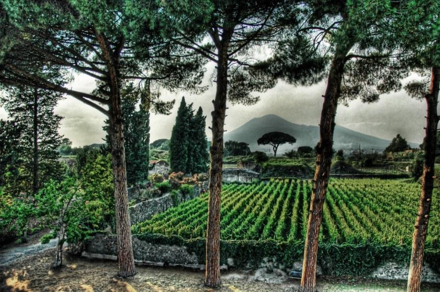 Pompeii Fertile Garden under the Shadow of Vesuvius