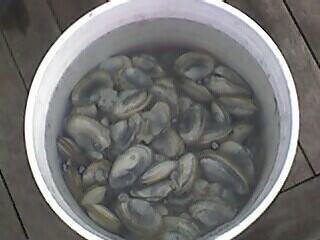 Bucket O' Clams