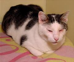 Cat Loft Cody