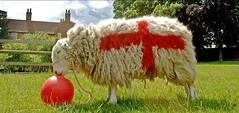 wc_sheep.jpg