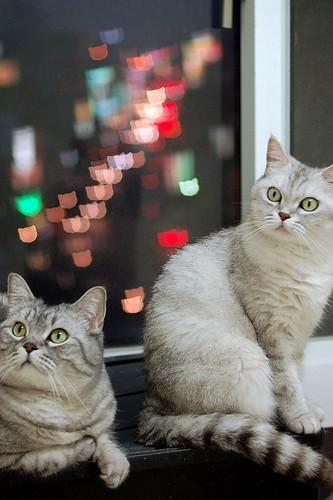 KittyLight_5553NC