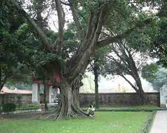 TempleTree