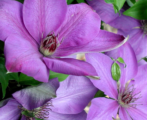 Clematis on the mailbox