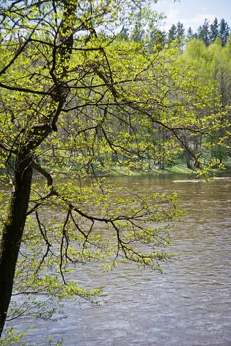 Pavasario upė