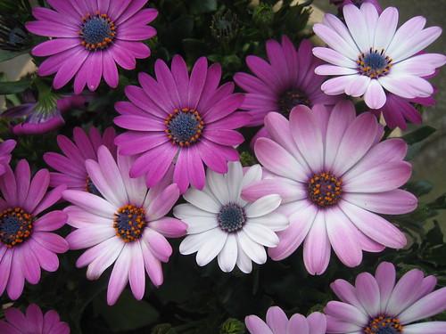 Purple flowers in our garden