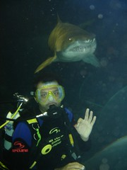 Watch out behind you! Shark diving...