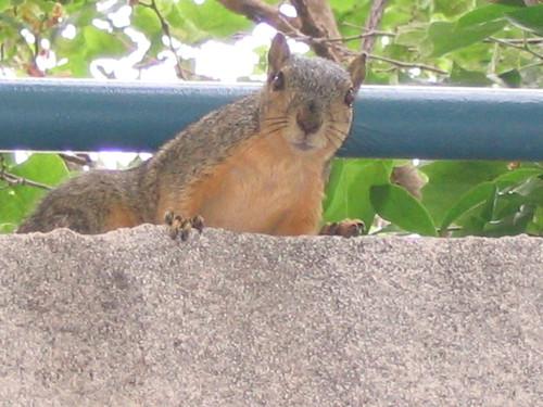 Squirrel looking my way
