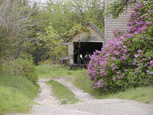 Tractor & Lilacs
