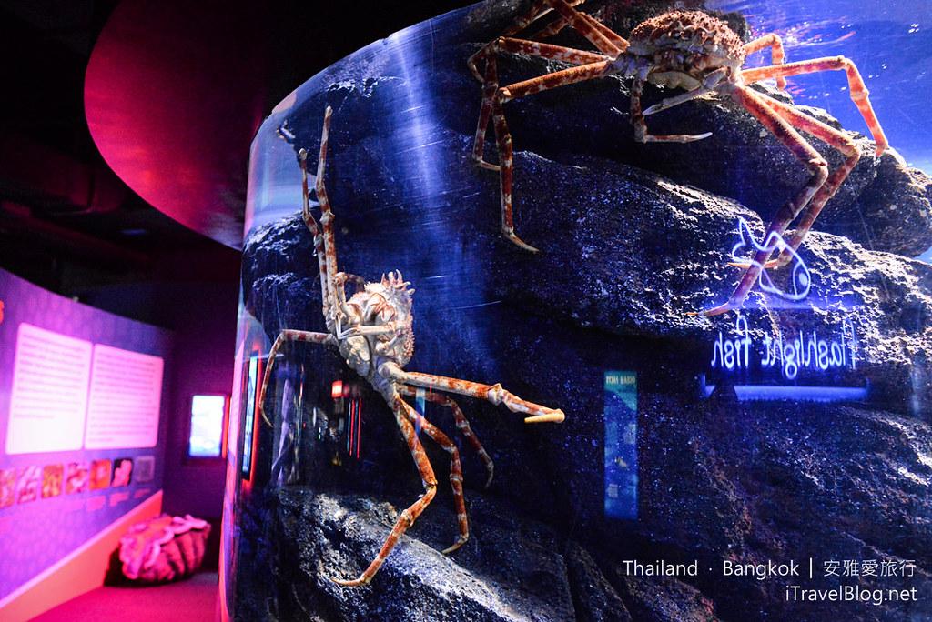 Siam Ocean World Bangkok 13