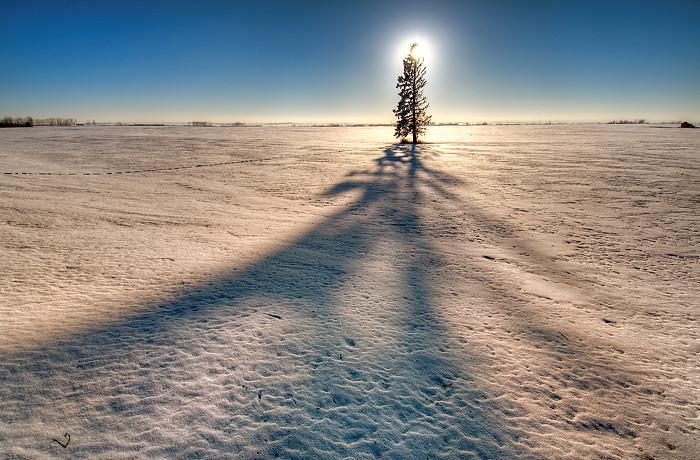 Sun And Lone Pine