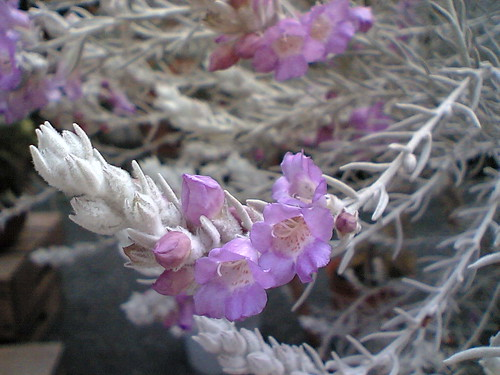 Pretty in Pink & Purple no. 5