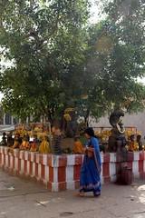 Banyan Tree & Nagas