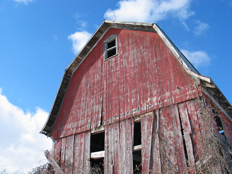 East side of the barn
