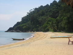 Nipah Right View