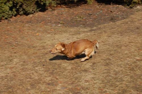 Rudas šuo