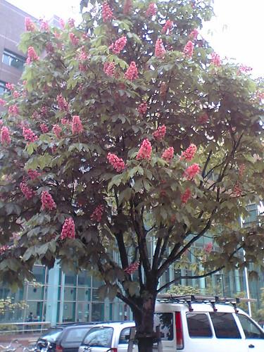 Unid tree