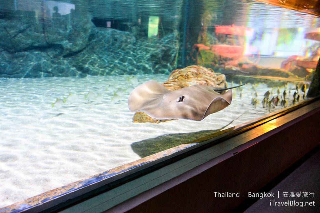 Siam Ocean World Bangkok 40