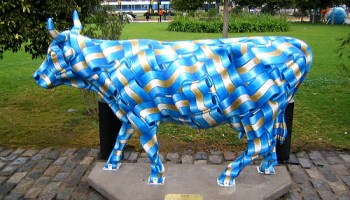 Vaca argentina