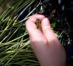 frog 01-06-06 3