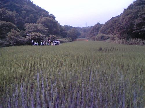 Maioka rice field