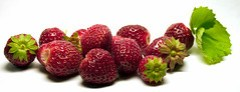 Erdbeeren 2 / Strawberries 2
